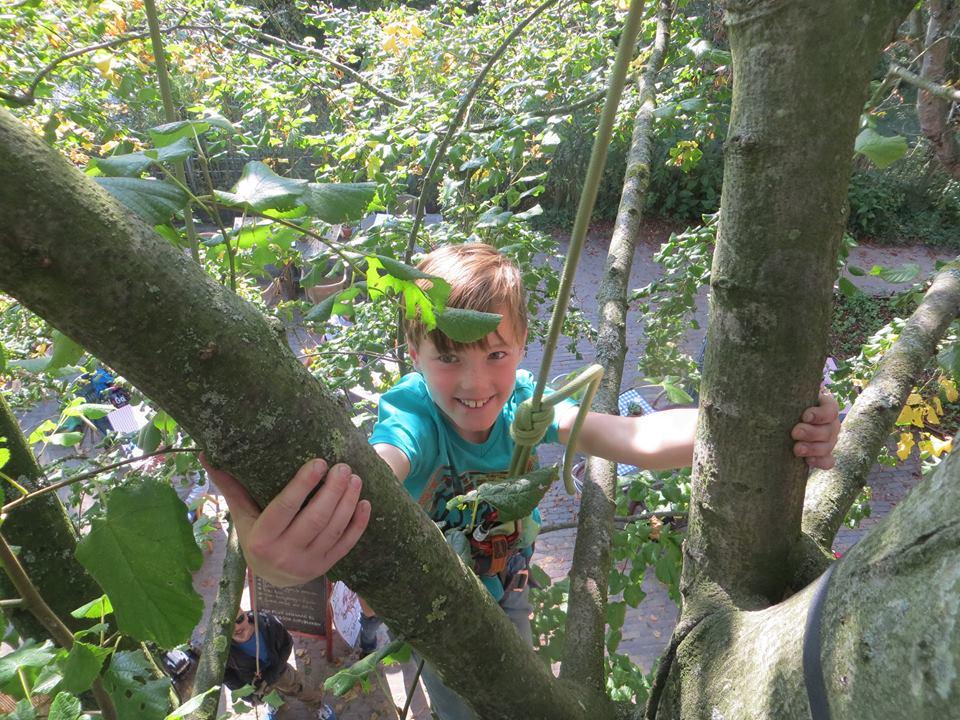 toprope boomklimmen met de Haagse Boomtoppers bij Pluk Den Haag