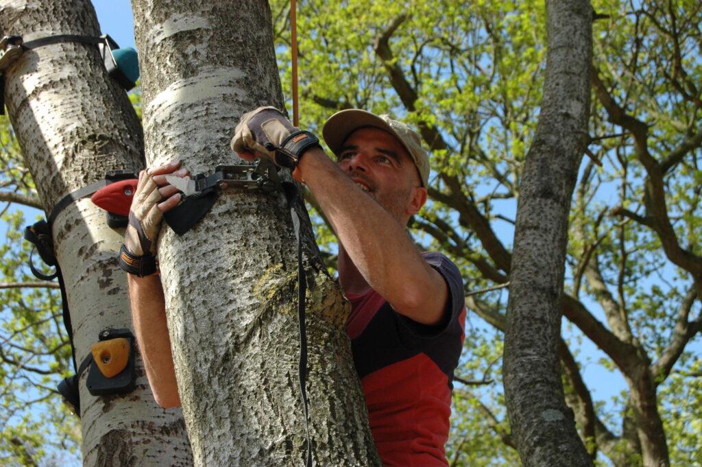 monkey climbing met de Haagse Boomtoppers uit Den Haag