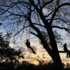 boomklimmen met de Haagse Boomtoppers op de natuurspeeltuin in Voorschoten